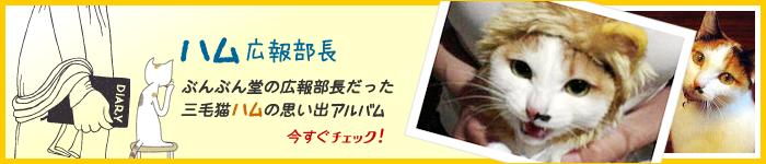 ぶんぶん堂の広報部長・ハムの思い出アルバム